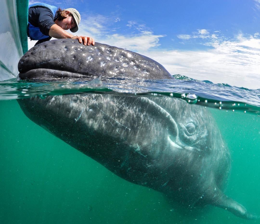 Томас Пескак – одаренный фотограф-подводник